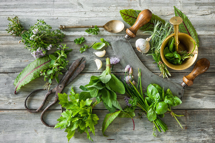 10 Antiviral Herbs To Naturally Fight Infection Amp How To