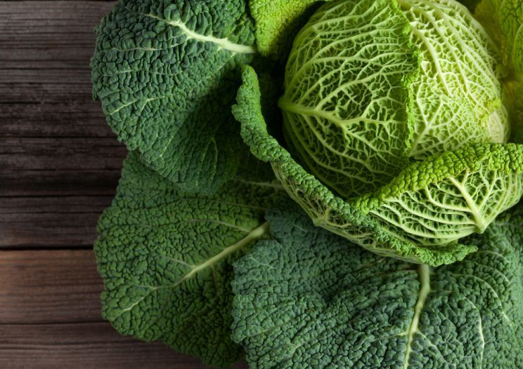 how to grow cabbage from scraps