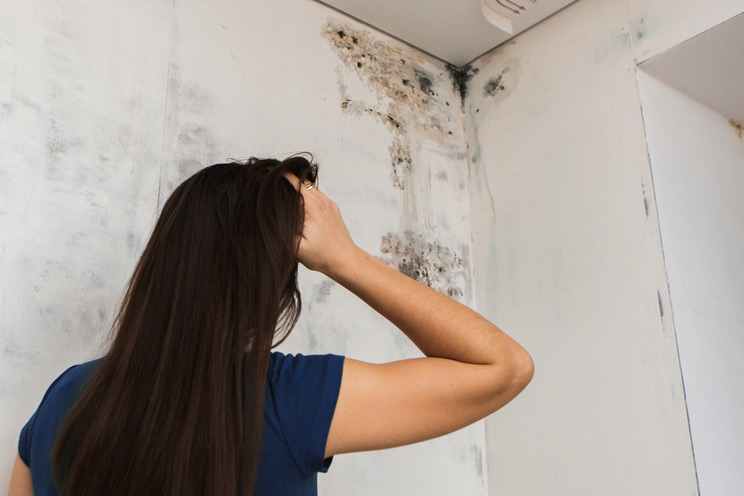 4 Signs Your Home Has Toxic Black Mold Amp How To Get Rid Of It