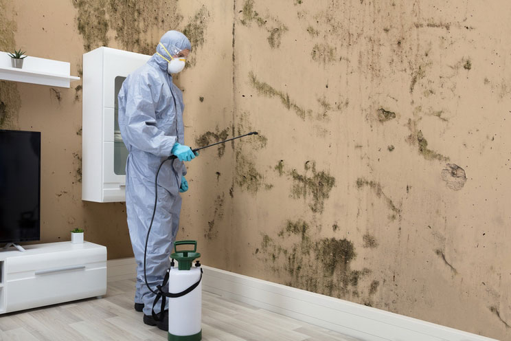 4 signs your home has toxic black mold how to get rid of it. Black Bedroom Furniture Sets. Home Design Ideas