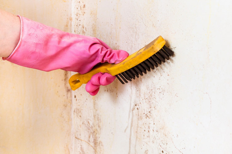 How-to-Get-Rid-of-Black-Mold.-Protect-Yourself.jpg